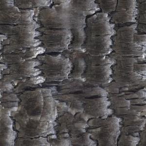 coal-texture (14)