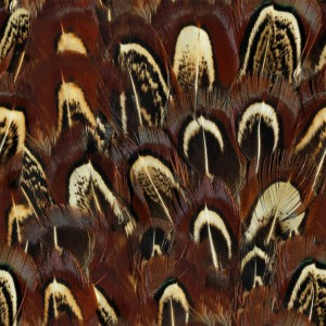 feather-texture (10)