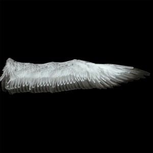 feather-texture (16)