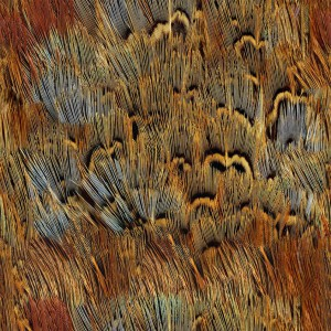 feather-texture (39)