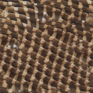 feather-texture (48)