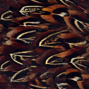 feather-texture (9)