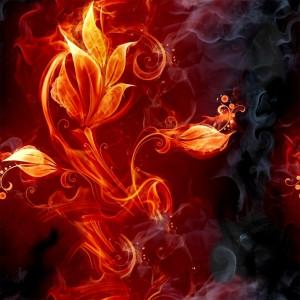 fire-(46)