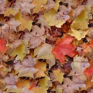 foliage-texture (11)