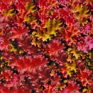 foliage-texture (12)