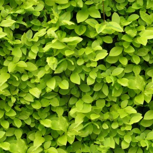 foliage-texture (16)