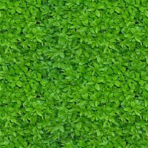 foliage-texture (20)