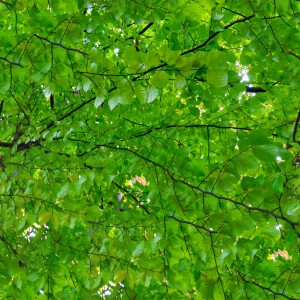 foliage-texture (23)