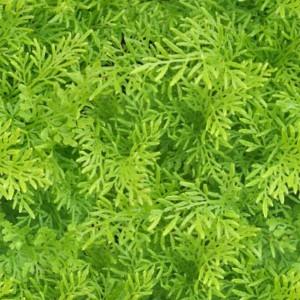foliage-texture (3)