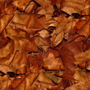 foliage-texture (31)