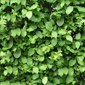 foliage-texture (32)
