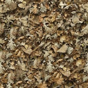 foliage-texture (36)