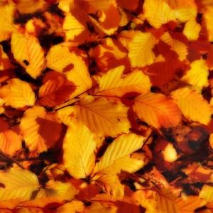 foliage-texture (38)