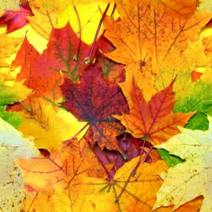 foliage-texture (4)