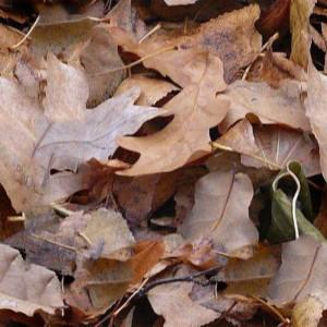 foliage-texture (40)
