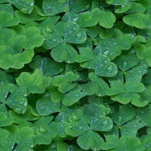 foliage-texture (41)