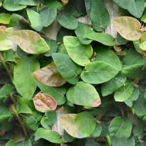 foliage-texture (43)