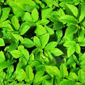 foliage-texture (45)