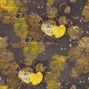 foliage-texture (47)