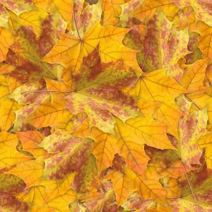 foliage-texture (52)