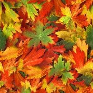 foliage-texture (55)