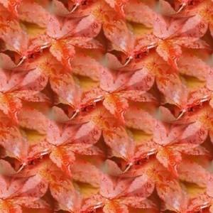 foliage-texture (59)