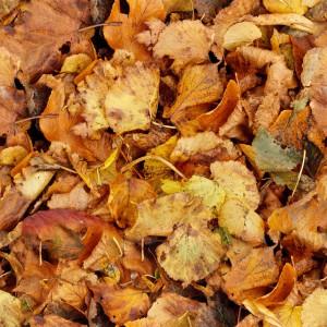 foliage-texture (60)
