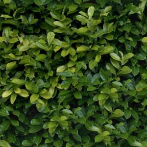 foliage-texture (62)