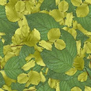 foliage-texture (65)
