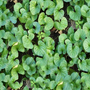foliage-texture (69)