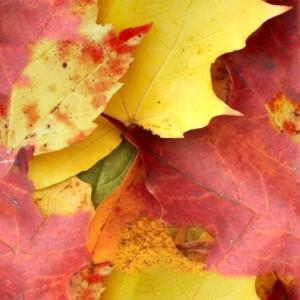foliage-texture (7)