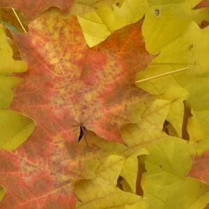 foliage-texture (76)