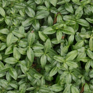 foliage-texture (79)