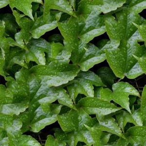 foliage-texture (81)