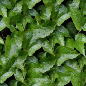 foliage-texture (84)