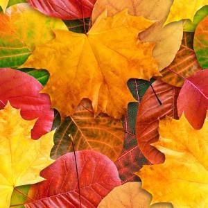 foliage-texture (87)
