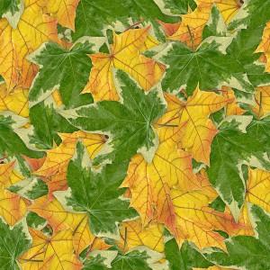 foliage-texture (9)
