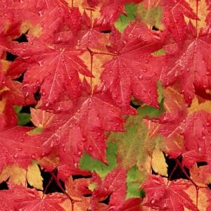 foliage-texture (91)