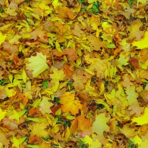foliage-texture (92)