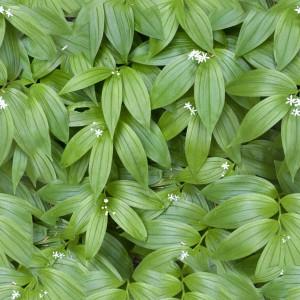 foliage-texture (93)