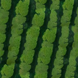 fruitpeel-texture (21)