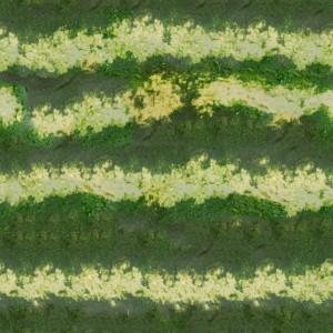 fruitpeel-texture (50)