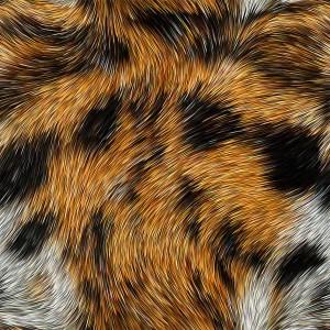fur-texture (2)