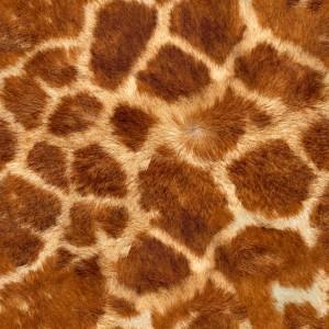fur-texture (52)