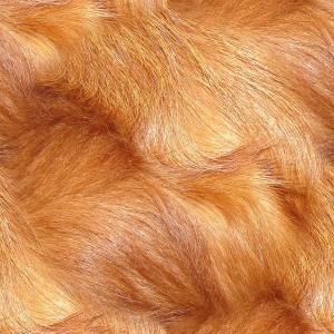 fur-texture (74)