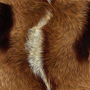 fur-texture (78)
