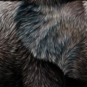 fur-texture (8)