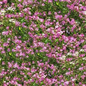 grass-texture (11)