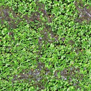 grass-texture (12)