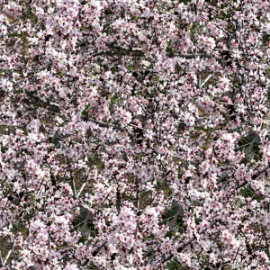 grass-texture (20)